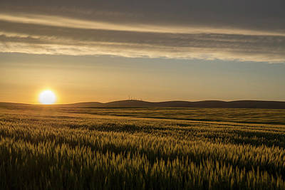 Photograph - Sunset On The Wheat by Lynn Hopwood