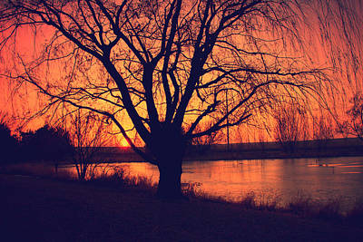 Sunset On Willow Pond Art Print