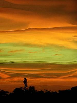 Photograph - Sunset Orange And Green by Florene Welebny