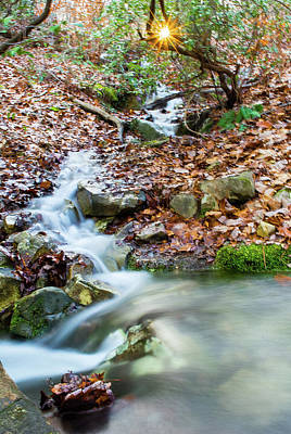 Photograph - Sunset Over An Oak Mountain Stream by Parker Cunningham