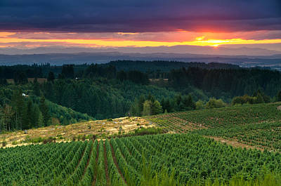 Photograph - Sunset Over Central Oregon 4 by Greg Nyquist