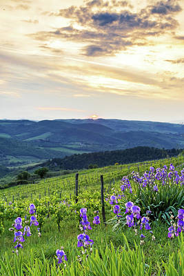 Sunset Over Chianti With Iris Art Print