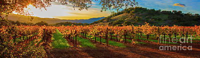 Sunset Over Gamble Vineyards Art Print by Jon Neidert