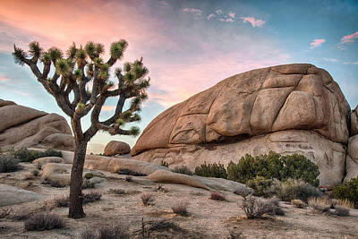 Photograph - Sunset Over Joshua Tree by Dave Dilli