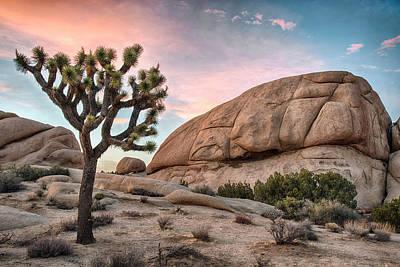 Desert Sunset Wall Art - Photograph - Sunset Over Joshua Tree by Dave Dilli