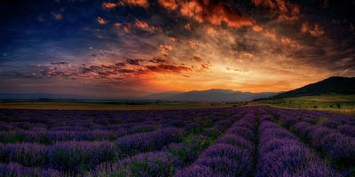 Photograph - Sunset Over Lavender Field 2 by Plamen Petkov