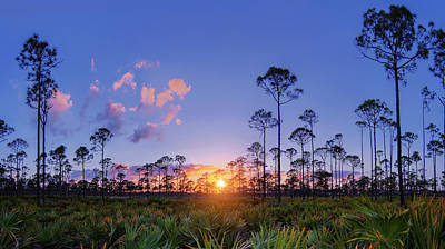 Photograph - Sunset Over Natural Florida Pines And Pom Frond by Justin Kelefas