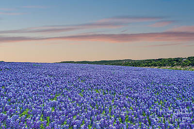 Wildflowers Photograph - Sunset Over Sea Of Blue by Tod and Cynthia Grubbs