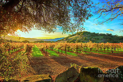 Sunset Over Napa  Art Print by Jon Neidert
