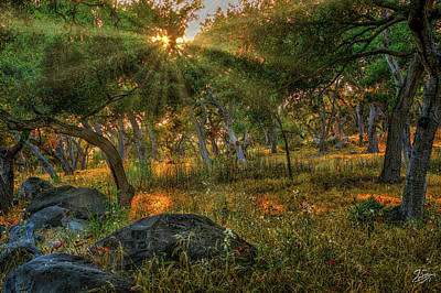 Photograph - Sunset Over The Montecito Forest by Endre Balogh