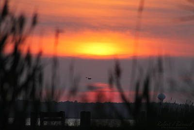 Photograph - Sunset Over The Reeds by Robert Banach