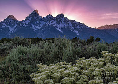 Photograph - Sunset Over The Tetons by Vincent Bonafede