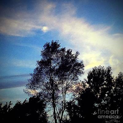 Frank J Casella Royalty-Free and Rights-Managed Images - Sunset Over the Tree by Frank J Casella