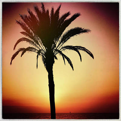Photograph - Sunset Palm by Dave Bowman