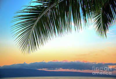 Photograph - Sunset Palm Frawn by Kelly Wade