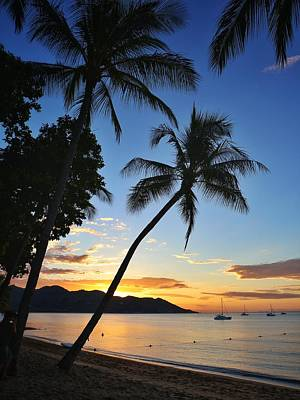 Photograph - Sunset Palm Tree At Horseshoe Bay On Magnetic Island by Keiran Lusk