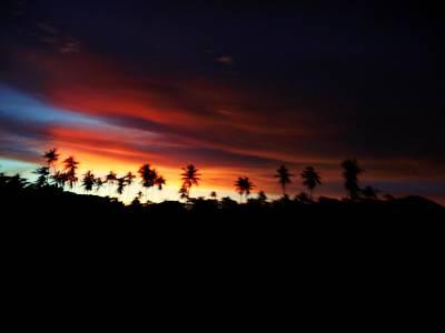 Photograph - Sunset Palm Trees by Dietmar Scherf