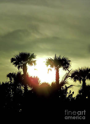 Photograph - Sunset Palms by D Hackett