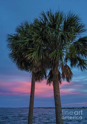 Photograph - Sunset Palms by Scott Hervieux