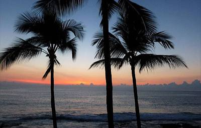 The Champagne Collection - Sunset Palms by Shawn Brandon