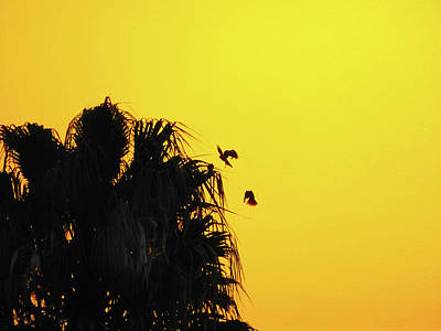 Photograph - Sunset Parrots by Mark Blauhoefer