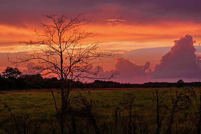 Photograph - Sunset Pasture by Robin Blaylock