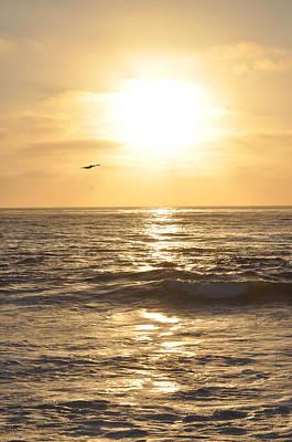 Sunset Pelican Silhouette Art Print