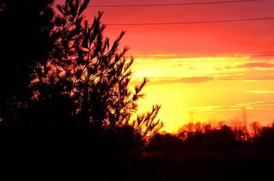 Wall Art - Photograph - Sunset Pine by Serbennia Davis