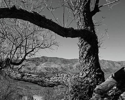 Photograph - Sunset Point Black Canyon City Arizona Az Tree Black And White by Toby McGuire