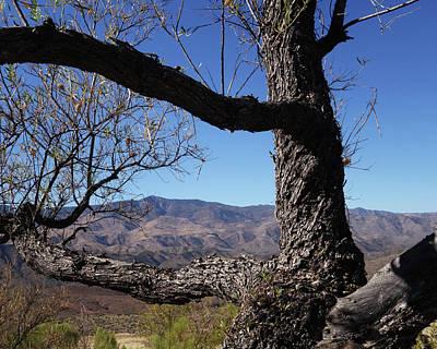 Photograph - Sunset Point Black Canyon City Arizona Az Tree by Toby McGuire