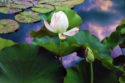 Sunset Pond Lotus Art Print