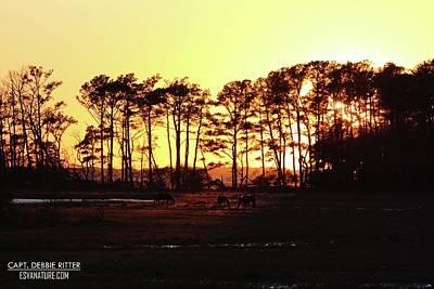 Photograph - Sunset Ponies 8080 by Captain Debbie Ritter