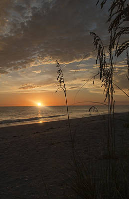Photograph - Sunset Portrait by Shari Jardina