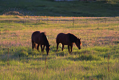 Photograph - Sunset Quarter Horses by Alana Thrower