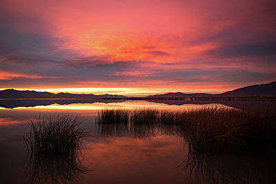 Sunset Reeds On Utah Lake Art Print