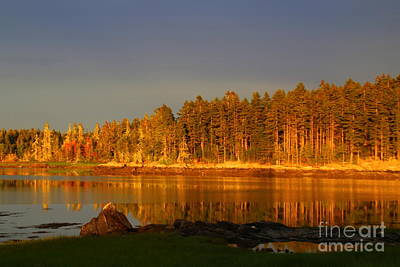 Photograph - Sunset Reflects On The Pines  by Lennie Malvone