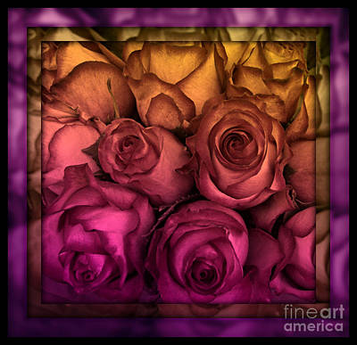 Photograph - Sunset Rose - Stained Glass Series by Miriam Danar