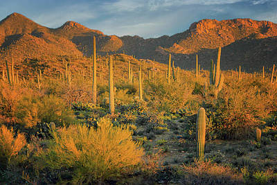 Photograph - Sunset - Saguaro National Park by Nikolyn McDonald
