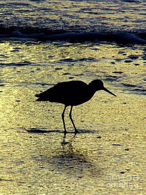 Photograph - Sunset Sandpiper by D Hackett