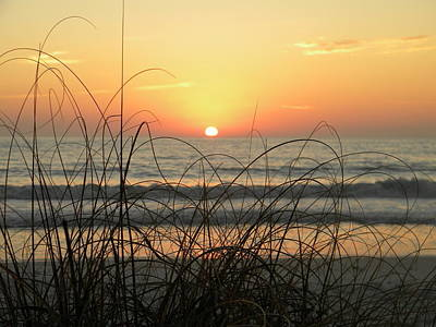 Sunset Sea Grass Art Print by Sean Allen