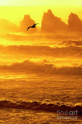 Photograph - Sunset Sea Stacks Sea Gull Bandon Oregon by Dave Welling