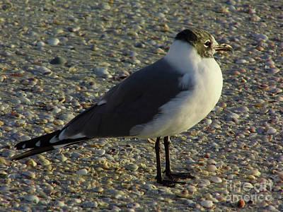 Photograph - Sunset Seagull by D Hackett