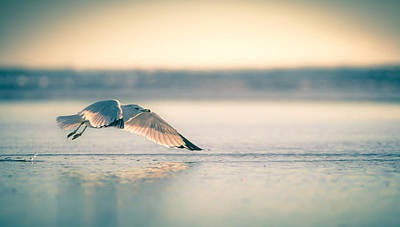 Art Print featuring the photograph Sunset Seagull Takeoffs by T Brian Jones