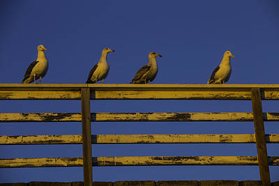 Sunset Seagulls Art Print by Garry Gay