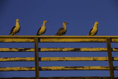 Sea Watch Photograph - Sunset Seagulls by Garry Gay