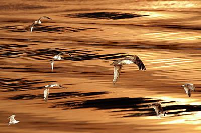 Photograph - Sunset Seagulls by Michael Mogensen
