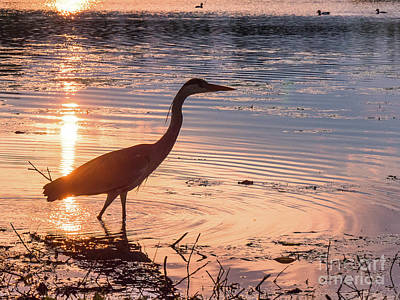 Photograph - Sunset Sentinel by Paul Farnfield