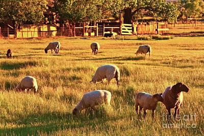 Sunset Sheep Ranch Original by Gus McCrea