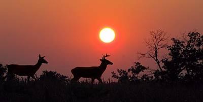Sunset Silhouette Art Print by David Dehner
