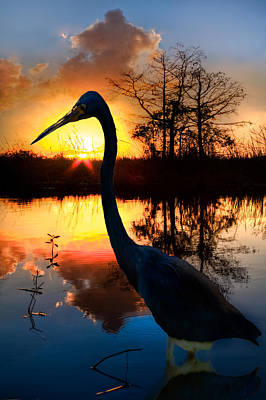 Heron Photograph - Sunset Silhouette by Debra and Dave Vanderlaan